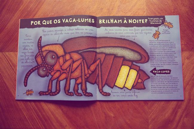insetos2